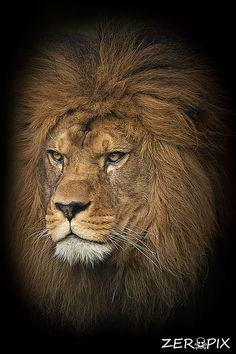 Portrait of the king by ZeroPix Photography on 500px