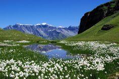 Альпийские луга неподалеку от Интерлакена