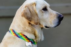 Diy dog collars