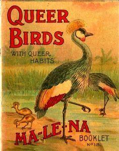 Queer Birds with Queer Habits