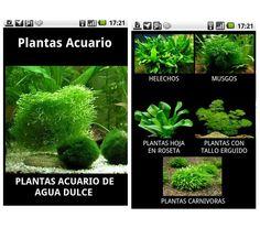 Plantas de acuario es una aplicación de jardinería dedicada a las plantas acuáticas