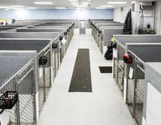 Premier Dog Boarding in Egg Harbor City NJ Shelter Dogs, Animal Shelter, Dog Kennel Designs, Kennel Ideas, Dog Kennel Panels, Luxury Dog House, Luxury Dog Kennels, Dog Walking Business, Wire Dog Crates