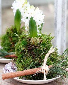 Godmorgon.  Ny arbetsdag som blir kort. Har man inga krukor så är det bara att slå in hyacinterna i mossa och ställa på fat.  Hyacinths in Moss instead in pots. #hyacint #jul#december #annikasnaturligating #nordicgardenbloggers