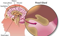Activate Your Third Eye And Enhance Your Mental Well-Being With This Pineal Gland Detoxification Pituitary Gland, Pineal Gland, Best Ab Workout, Abs Workout For Women, Lymph Detox, Corpus Callosum, Brain Stem, Best Abs, Alternative Therapies
