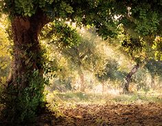 """Check out new work on my @Behance portfolio: """"Tree world"""" http://be.net/gallery/41647839/Tree-world"""