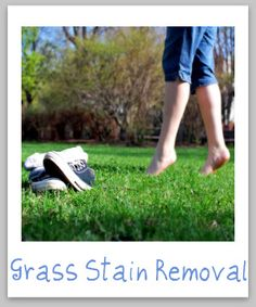 Instructions for removing grass stains from clothes, upholstery and carpet.