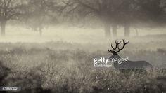 Stock Photo : deer in the mist
