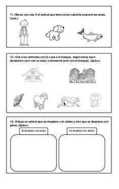 Ciencias prueba primer año Learning Spanish, Preschool, Classroom, Education, Home, Literacy Centers, Multiplication Activities, Fun Activities, Science Books