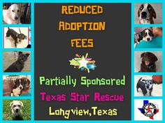 Due to our wonderful supporters, these 9 fantastic dogs/puppies have been partially sponsored and therefore, have reduced adoption fees. They are all available for adoption through Texas Star Rescue in Longview, Texas #TSRadopt #dog #helpsavealife #rescuedismyfavoritebreed #spaniel #woof #adoptdontshop #DogsTale #texasstarrescue #rescue #adopt #puppies #bordercollie #doxie #labrador #maltese #senior #saintbernard #terrier #schnauzer