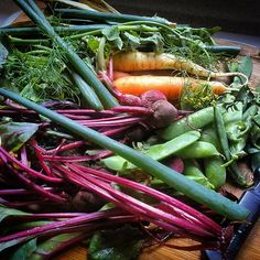 All Day I Dream About Garden (ADIDAG) .carrots.beets.peas.onions.dill.cilantro.lettuce.  #harvest #reapwhatyousow #edibleplants #colorful #vegetables #eatyourveggies #garden #communitygarden #mountaingarden #growyourown #foodisfree #fromseed #noGMO #botanicalinterests #herbs #Padgram