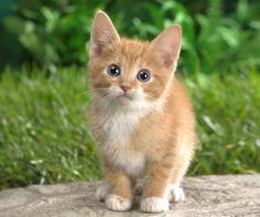 kitten-2.jpg (960×800)