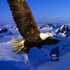 Bald Eagle in Flight - Proud - Animal Poster Eagle Wallpaper, Full Hd Wallpaper, Animal Wallpaper, Eagle Pictures, Animal Pictures, Eagle Images, Bad Boys Blue, Eagle In Flight, Wings Like Eagles