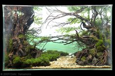 aquascaping, unknown designer  AGA aquascaping contest delivers stunning freshwater views