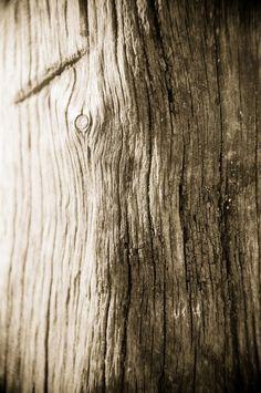 Wood Texture .. - Visit www.verdaguerjuan.com.ar to see all my work! Thanks