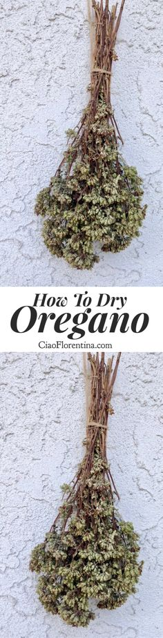 How To Dry Oregano from the Garden. Tradition Hanging method and oven method included | CiaoFlorentina.com @CiaoFlorentina
