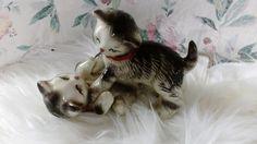 2 lekne søte katter Retro, Cats, Animals, Gatos, Animales, Animaux, Animal, Cat, Animais