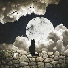 """""""Do not swear by the moon, for she changes constantly. then your love would also change.""""  ― William Shakespeare, Romeo and Juliet"""