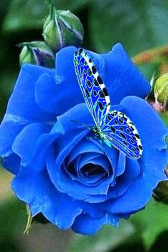 Beautiful Flowers Pictures, Beautiful Rose Flowers, Beautiful Butterflies, Beautiful Prayers, Beautiful Gif, Rosas Gif, Android App Design, Flowers Gif, Pretty Animals