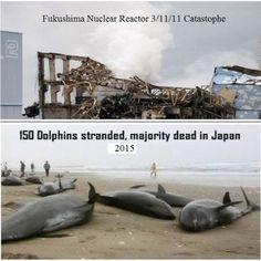 Nuclear Reactor, Fukushima, Ocean Life, Pacific Ocean, Betrayal, Dolphins, Japan Nuclear, Road Trip, Novels