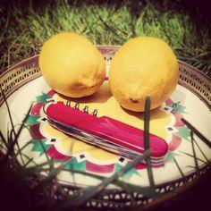 Z u r e  l i e f d e &  V a l s e  v r i e n d s c h a p In de 17e eeuwse schilderkunst stonden citroenen symbool voor zure liefde en valse vriendschap.  Zou dat nu nog zijn? Ik vind ze gewoon mooi geel en voor mij staan ze vooral symbool voor een warme, relaxte zomer vol liefde en vriendschap!  #citroen #lemon #zomer #summer #zon #sun #picknick #swissarmyknife #stilleven #stillife #schilderij #painting #kunstgeschiedenis #arthistory