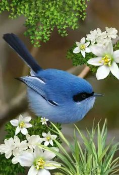 Love little birds All Birds, Cute Birds, Pretty Birds, Little Birds, Beautiful Birds, Animals Beautiful, Cute Animals, Exotic Birds, Colorful Birds