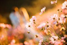 A Fairytale Flower Field Wedding | Enamoré Weddings