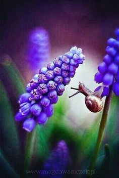 Tiny life of a snail