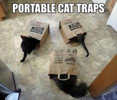 Portable cat traps…