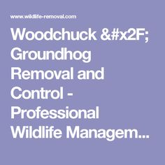 Woodchuck / Groundhog Removal and Control - Professional Wildlife Management
