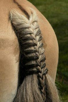 Horse Mane Braids, Horse Hair Braiding, Cute Horses, Pretty Horses, Horse Spirit Animal, Funny Horse Videos, Horse Halloween Costumes, Horse Riding Tips, Horse Tail