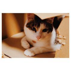 巨匠が動き出しました…改築が始まるようです。 2代目段ボールハウスの運命や如何に😱😱 #cat #cats #ねこ #ネコ #猫 #保護猫 #保護猫出身 #元保護猫 #キジ白 #きじしろ #ねこ部 #イケにゃん #にゃんすたぐらむ #nekostagram #にゃんだふるらいふ #ねこのいる生活 #愛猫 #猫好きさんと繋がりたい #amazonの箱 #猫巨匠