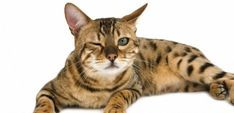 Cat owners are well placed to observe a change in behavior in their animals. Pet Corner, Photo Chat, Animals And Pets, Cats And Kittens, Dog Cat, Kitten Cat, Kawaii, Dogs, Whisky