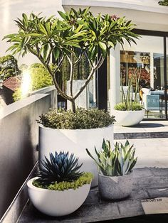 When plantlife needs to survive and thrive in small spaces with minimal maintenance, potted plants are your answer. maintenance garden inspiration This rooftop terrace features a low-maintenance garden Outdoor Pots, Outdoor Gardens, Rooftop Gardens, Outdoor Mirror, Outdoor Spaces, Landscape Design, Garden Design, Patio Design, Low Maintenance Garden