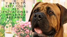 How Long Should You Leave Your Dog at Home? AND 7 Ways to Keep Your Pet Entertained While You Are Away!