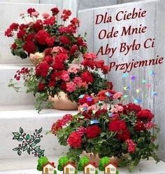 Christmas Wreaths, Floral Wreath, Holiday Decor, Plants, Juki, Humor, Cabaret, Night, Life