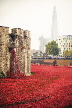 Red ceramic poppies fill the moat of the Tower of London to commemorate every British or Commonwealth soldier killed during the war. God, I love London. Flower Carpet, Paris 3, London Attractions, London Photography, Street Photography, Travel Photography, Remembrance Day, England And Scotland, London Life