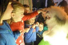 En Albergue Teruel Internacional Dogs, Animals, Colors, Animales, Animaux, Pet Dogs, Doggies, Animal, Animais