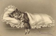 1902 Vintage Cat Postcard Little Kittens, Kittens Cutest, Cats And Kittens, Grey Kitten, Japanese Cat, Antique Illustration, Sleeping Dogs, Vintage Cat, Crazy Cat Lady