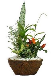 Na entrada de uma casa, loja ou empresa um belo e simples vaso com plantas e/ou flores simboliza boas-vindas, atrai sorte . Colorful Plants, Flowers, Ceramic Flowers, Mini Garden, Faeries Gardens, Flower Arrangements, Plants, Plant Design, Magic Herbs