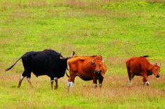 Ayo Ke Tempat Wisata Padang Rumput Sadengan di Banyuwangi, Afrika di Jawa