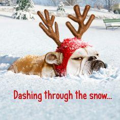 Bulldog Reindeer - Avanti Stand Out Pop Up Funny Christmas Card Avanti Press Animals Images, Funny Animals, Cute Animals, Christmas Animals, Christmas Dog, Merry Christmas, Bulldog Puppies, Dogs And Puppies, Doggies