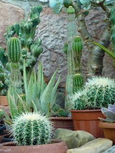Cactus   by jon orue