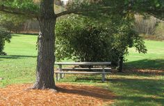 The Importance of Mulch for Tree Health