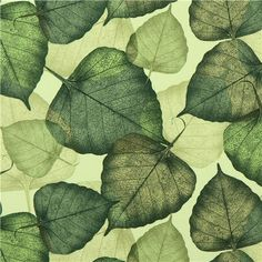 light green loeaf fabric Timeless Treasures USA 1