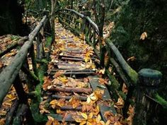 bluepueblo: Autumn Forest Bridge, Japan photo via bridges Forest Path, Autumn Forest, Autumn Fall, Landscape Background, Japan Photo, Natural Scenery, Covered Bridges, Illustration, Places To Go