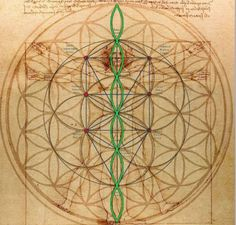 vetruvian man with sacred geometry / flower of life