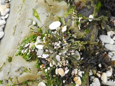 Tide pool Tide Pools, Photo Essay, California, Plants, Plant, Planets