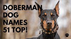 🐾 Doberman Dog Names 51 BEST & MALE & FEMALE Ideas | Names Cool Female Dog Names, Best Dog Names, Cute Girl Puppy Names, Cute Names, Best Apartment Dogs, Female Ideas, Best Dogs For Families, Group Of Dogs, Doberman Dogs