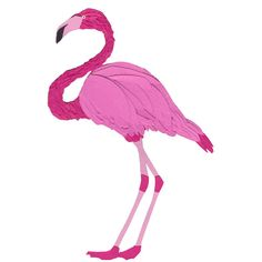 Flamingo A5 Glicee Print bird illustration papercut art Animal wall... ($8.86) ❤ liked on Polyvore featuring home, home decor, wall art, colorful wall art, flamingo wall art, colorful home decor, bird wall art and tropical home decor