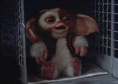 Screen used Gizmo puppet Gremlins 2. - Movie Prop Forum at Movie Prop Collectors .com Movie Props & Movie Entertainment Memorabilia